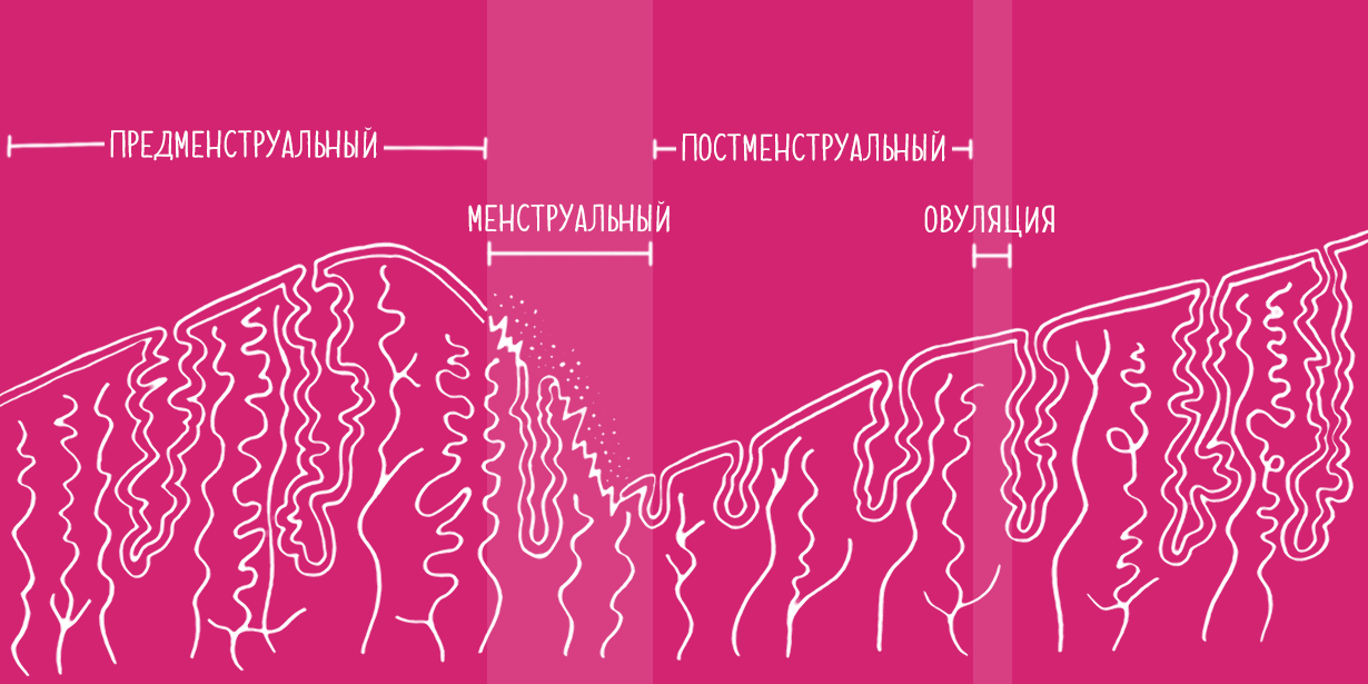 1230x615_Uterine-cycle_Secondary-RU-v2.png